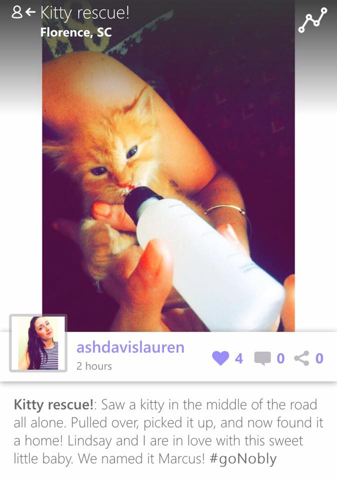Saving lives one kitty at a time!